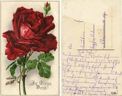 (y799) AK Rose - Fleurs
