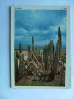 Israël Ein Gedi Cactus Garden - Israël
