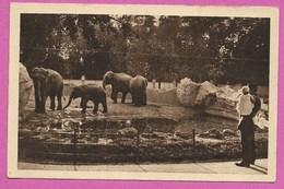 94 Val De Marne Charenton Le Pont Zoo Elephant Env D Ivry Créteil - Charenton Le Pont