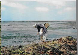 50 - AGON COUTAINVILLE  - Pêche Aux Crustacés Dans Le Cotentin      H - France