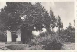 Postkaart/Carte Postale GEETBETS De St Rochuskapel  (C73) - Geetbets