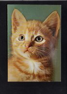 """Animal / Chat ( Carte Sonore """" Pouet Pouet """" ) - Chats"""