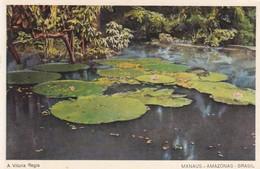 CARTOLINA - BRASILE - MANAUS - AMAZONAS - A. VITORIA REGIA - Manaus
