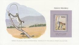 RWANDA Green Monkey.BARGAIN.!! - Apen