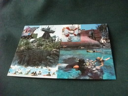 WALT DISNEY WORLD TYPHOON LAGOON CONCHIGLIE SHELL E CORALLI SUBACQUEI - Disneyworld