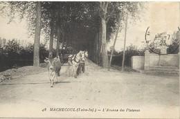 44   MACHECOUL    L AVENUE  DES  PLATANES - Machecoul