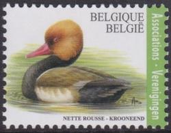2018 - 4759 - Krooneend  (Verenigingen) - Buzin / Nette Rouse ( Associations) - Buzin - XX - Belgique