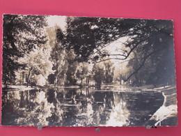 Visuel Pas Très Courant - 75 - Paris - Bois De Vincennes - Le Lac De Saint Mandé - Reflets D'automne - Scans Recto-verso - Arrondissement: 12