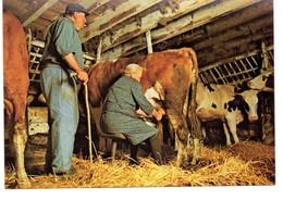 CPM, Grand Format 17 X 12, Traite D'une Vache à La Main Dans Une étable, Monde Agricole, Jamais Voyagée - Cultures