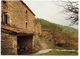 CPM, Grand Format 17 X 12, Les Vaches Rentrent à L'étable Dans Une Ferme, Monde Agricole, Jamais Voyagée - Cultures