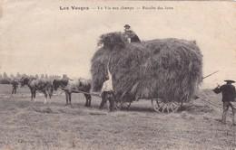 LES  VOSGES ,,,,,  La VIE  AUX  CHAMPS  ,,,,,   LA  RECOLTE  Des  FOINS ,,,,  VOYAGE 1919,,,PEU COURANTE,,, - Cultures