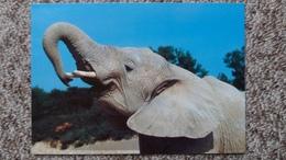 CPM ELEPHANT D AFRIQUE RESERVE AFRICAINE DE SIGEAN ED CIM - Éléphants