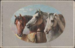 Horses - Three Stablemates, C.1905-10 - CW Faulkner Postcard - Horses