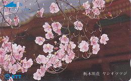 Télécarte Japon / NTT 250-089 - Arbre Fleuri / Fleur Gros Plan TBE - Tree Blossom Japan Phonecard - Blüte TK - Fleurs