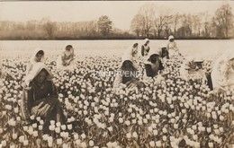 Lincolnshire  SPALDING Field  Tulip Pickers     RP Lc89 - Inghilterra