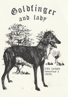 Très Belle Carte Postale De Chien Lévrier  WHIPPETS Ou GREYHOUND  Ou BARZOI - Honden