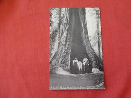 Tree----  Palace Hotel South Grove   Big Tree Grove  California >   Ref 3190 - Arbres
