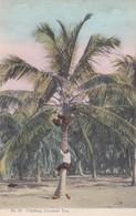 CARTOLINA - GIAMAICA - CLIMBING COCOANUT TREE - Giamaica
