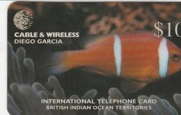 Diego Garcia - The Chagos Anemone Fish - DG67 - Diego-Garcia
