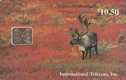 Alaska - Bull Caribou In Fall - Denali National Park - Telefoonkaarten