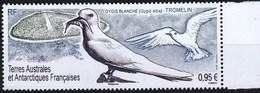 TAAF 2019 Bird White Tern 1v MNH - Other