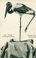 PARIS V 5 - Jardin Des Plantes Oiseau Cigogne Jabiru Cochinchine - Parcs, Jardins