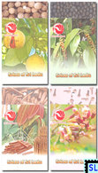 Sri Lanka Stamps 2019, Spices, Booklets - Sri Lanka (Ceylon) (1948-...)