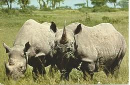 (A) : East Africa's Wild Life - Rhinocéros