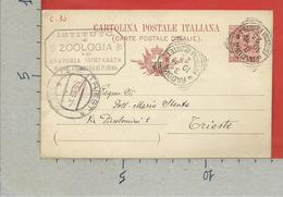 CARTOLINA POSTALE VG ITALIA - Tipo Floreale V. Emanuele III - MARIO STENTA Ist. ZOOLOGIA TRIESTE 1906 - S. CP30 MILL. 05 - 1900-44 Vittorio Emanuele III