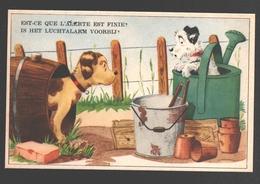 Est-ce Que L'alerte Est Finie? / Is Het Luchtalarm Voorbij? - Dog / Chien / Hund - Humor
