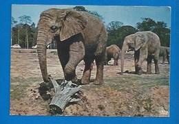 ANIMAUX - 78 - THOIRY - ÉLÉPHANTS EN LIBERTÉ - 1973 - Éléphants