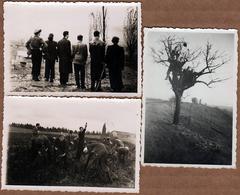 3 Photos Originales Portrait D'une Intrépide Bande De Jeunes à La Cueillette, Dans Un Arbre & Enfin De Dos Vers 1940 - Personnes Identifiées