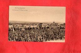 F0103 - Moët Et Chandon - Les Vendanges à Le Mesnil Sur Oger - Other