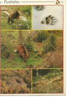 (A) : Animaux : Ours Dans Les Pyrenées - Ours
