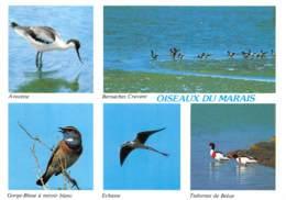 85 Vendée Les Oiseaux Du Marais Poitevin 35 (scan Recto Verso)MF2758UND - Saint Hilaire De Riez