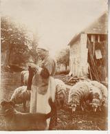 Touraine Avec Moutons - 1915 - Photo Format 8 X 10 Cm - Personnes Anonymes