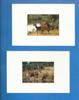 ANIMAUX - 16 - ESSE - LOT DE 2 CARTES - CERFS DU DOMAINE DE LONGEVILLE - PHOTOG : CHARLOTTE PELHAN - VERSO - Autres Communes