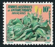 TAAF 1958 - Yv. 11 *   Cote= 14,90 EUR - Flore : Pringlea (chou Des Kerguelen)  ..Réf.TAF21018 - Terres Australes Et Antarctiques Françaises (TAAF)