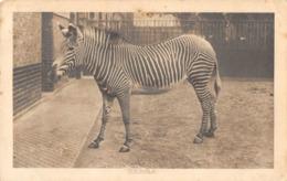 R177368 Zebra. Reading Education Committee. Sertificate Of Merit - Postcards