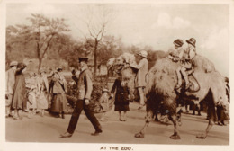 R177494 At The Zoo. W. E. Mack. RP - Postcards