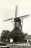 Zuidland, De Arend, Korenmolen, Windmills, Real Photo - Watermolens