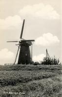 Zuid Beijerland, Landzicht, Molen Korenmolen, Windmill, Real Photo - Watermolens