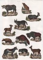Découpages/ Gravures D'Animaux/ Colorisés/ Encollés/ Vers 1850-1880  JE221 - Other Collections