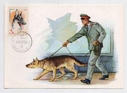 CARTE MAXIMUM CM Card USSR RUSSIA Fauna Dog Militia Police - 1923-1991 URSS