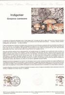 Document De La Poste, Champignon Bolet Indigotier - Pilze