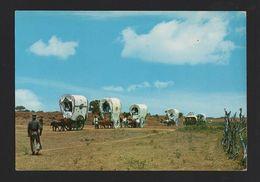 ROMERIA DEL ROCIO ANDALUCIA Postcard 1960s SPAIN Oxen Carts ESPAÑA COWS BULL COW - Espagne