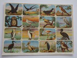 OISEAU 16 Chromos / Images Scolaire School Bien Oiseaux Birds Planche 325 X 240 Mm Dos Blanc Papier Glacé - Sonstige