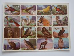 OISEAUX RAPACES HIBOU 16 Chromos / Images Scolaire School Bien Oiseaux Birds Planche 325 X 240 Mm Dos Blanc Papier Glacé - Autres