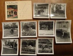 THE SAN DIEGO ZOO: CARTE POSTALE DÉPLIANTE AVEC 13 VUES + 9 PHOTOGRAPHIES D'UN VISITEUR Vers 1950 - San Diego