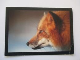 Renard Red Fox - Animals